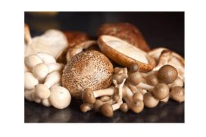 paddenstoelenmix